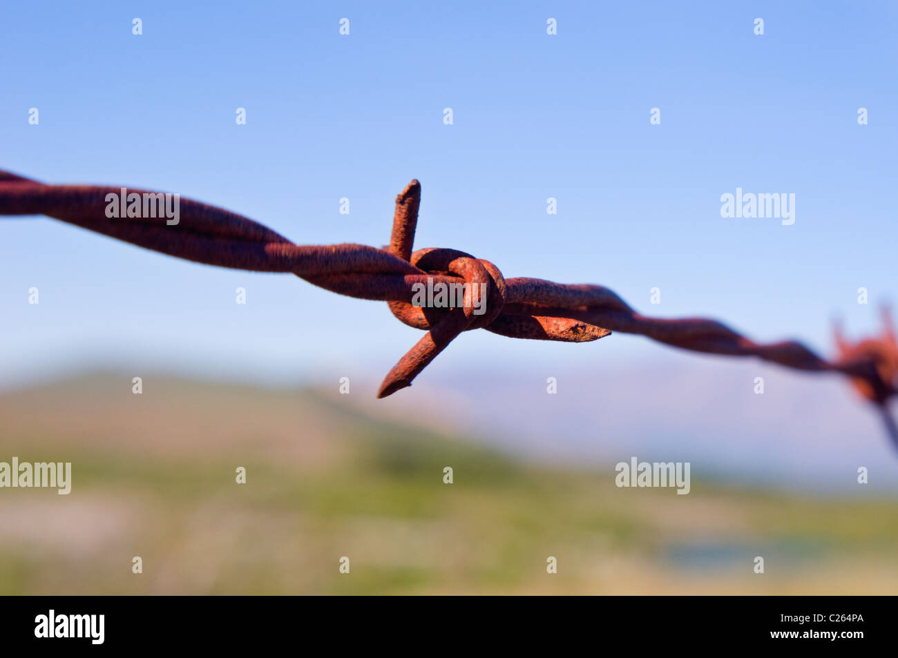 Close up of rusty barbed wire barb - Stock Image