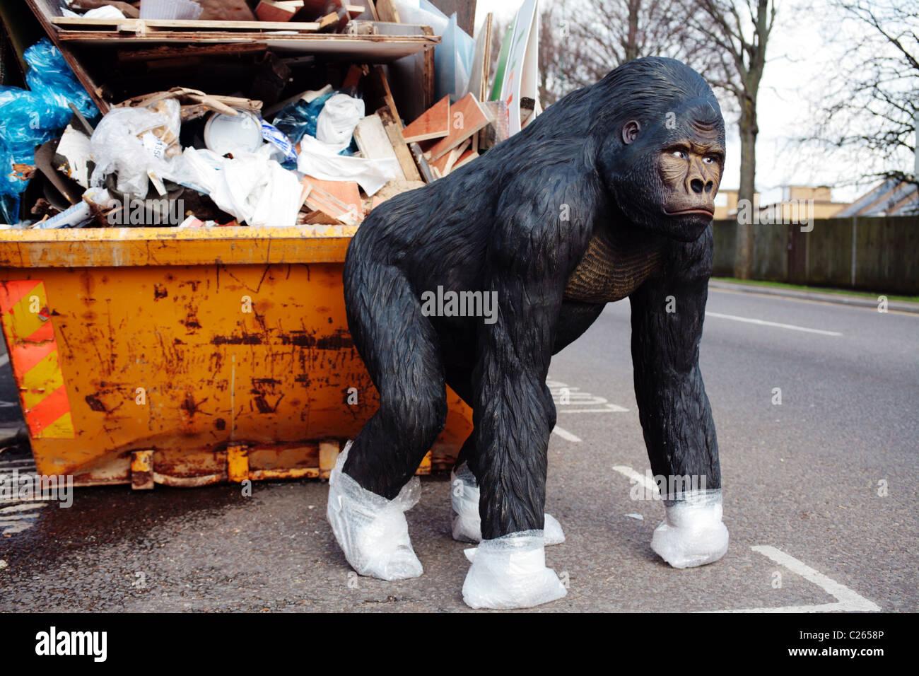 gorilla at bin - Stock Image
