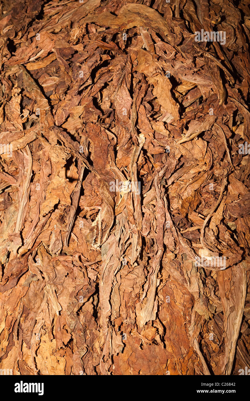 Dried tobacco leaves Andorra - Stock Image
