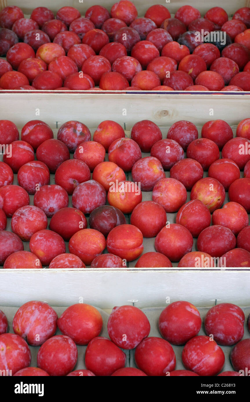 Red Plums on a Market Stall Stock Photo