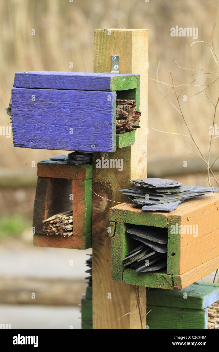 Habitat creation for Bumble Bees and other invertebrates. - Stock Image