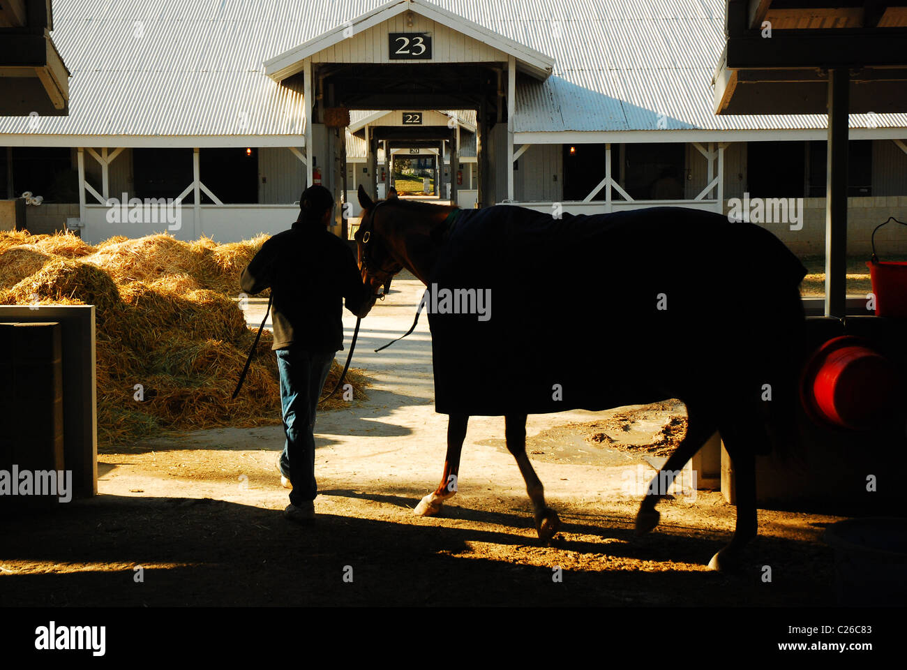 Horse being lead back to his stables following the early morning workout at Keeneland Race Track - Stock Image