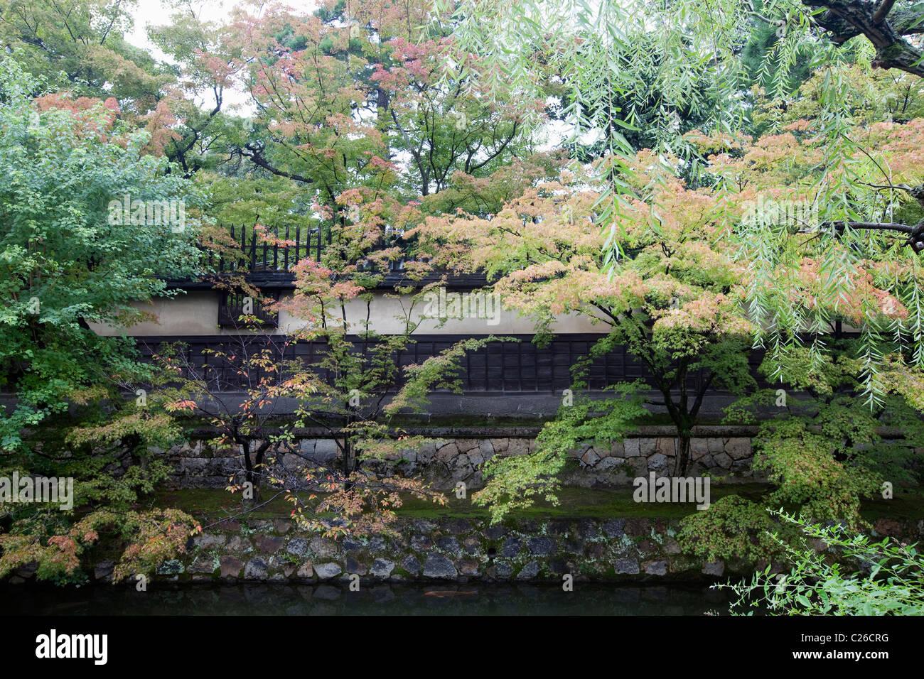 Black Willow Tree Stock Photos & Black Willow Tree Stock Images - Alamy