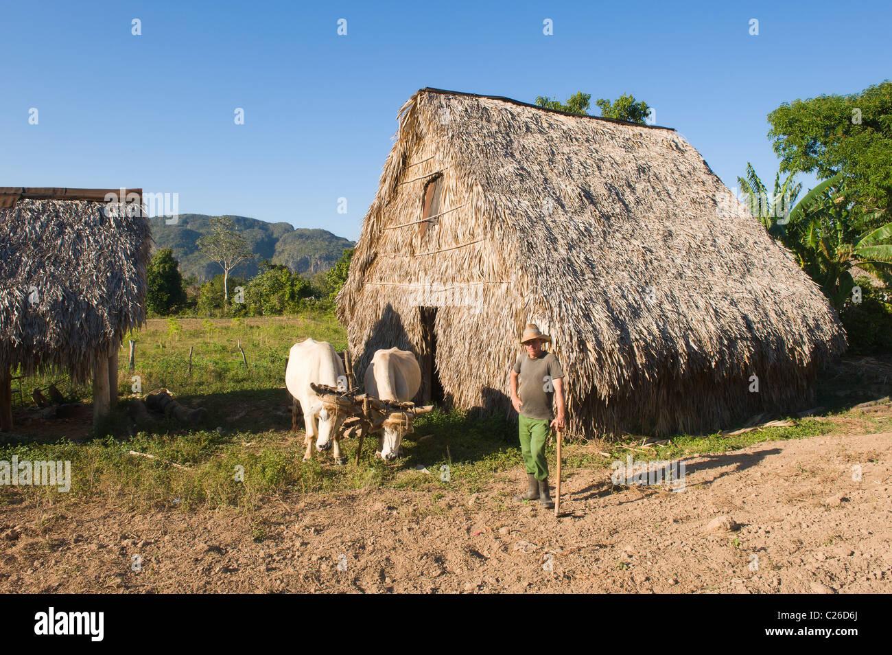 Vinales Valley, Hut where tobacco leaves are dried, Mogotes, Pinar del Rio Province, Cuba - Stock Image