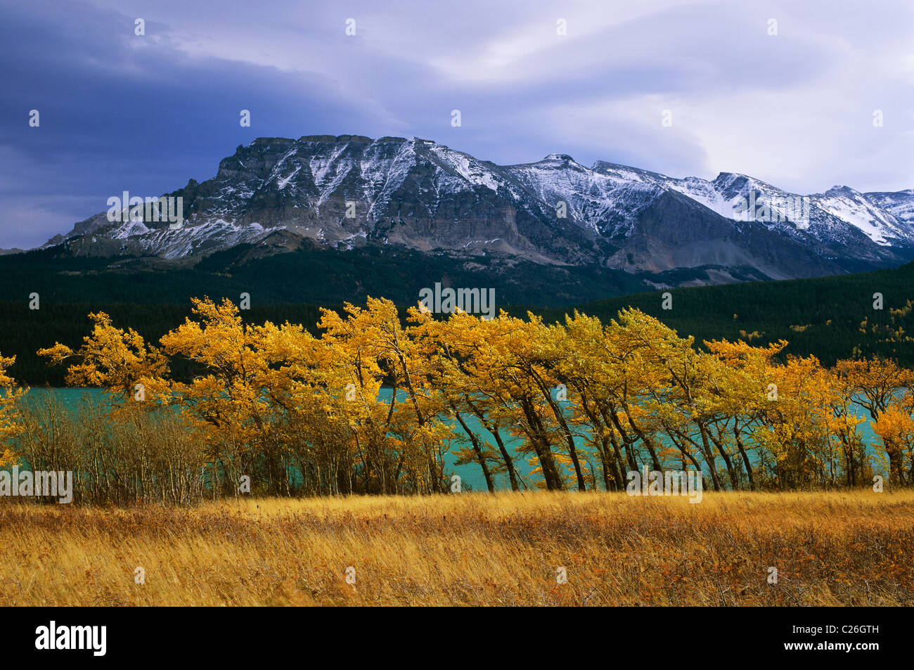 Howling winds forebode stormy weather in Waterton-Lakes National Park, Alberta, Canada. - Stock Image