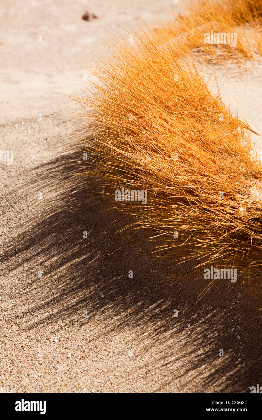Grass in sand, south western deserts of Bolivia, South America. - Stock Image