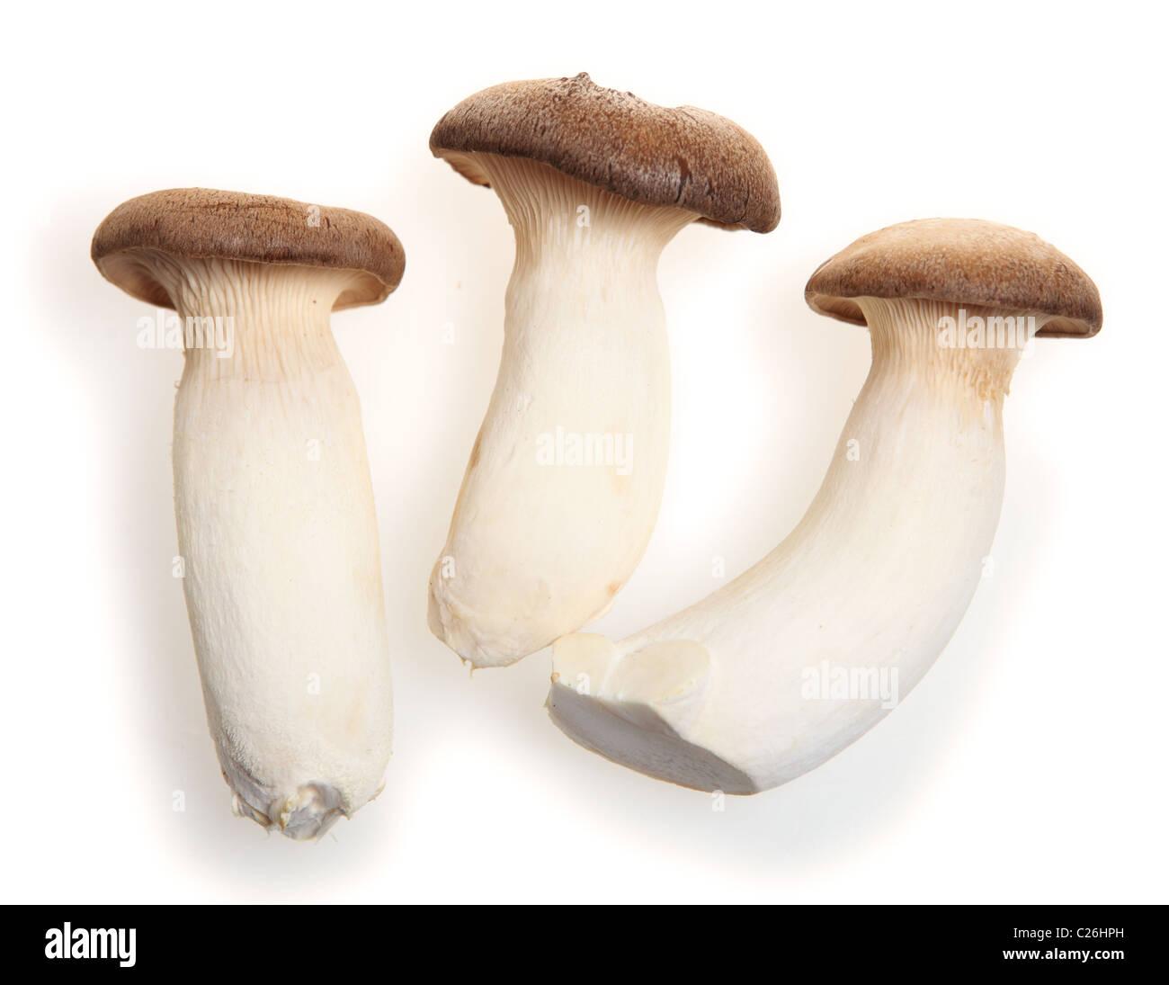 Pleurotus eryngii known as the king oyster mushroom. king trumpet mushroom or french horn mushroom. It is used in - Stock Image
