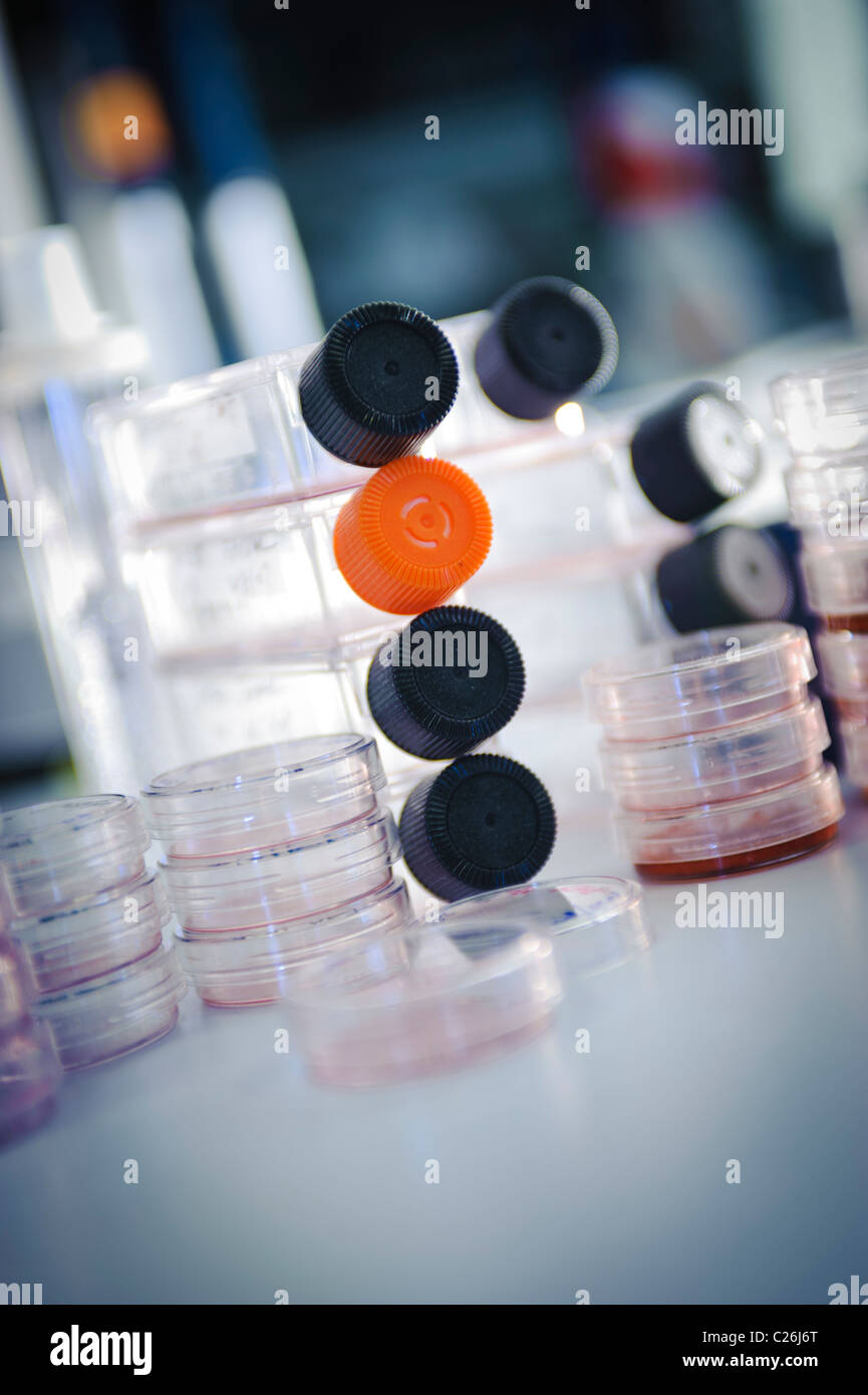 cell culture flasks and petri dishes in science lab laboratory Stock