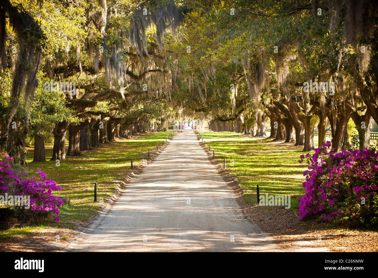 Avenue of the Oaks at Boone Hall Plantation in Charleston, SC. - Stock Image