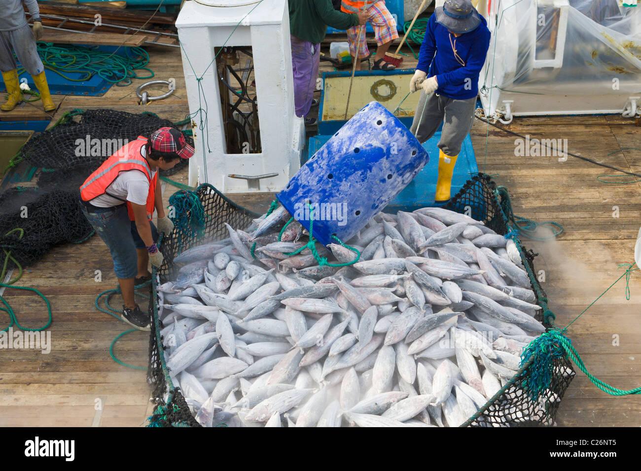 Tuna being unloaded from fishing boat, Manta, Ecuador Stock Photo