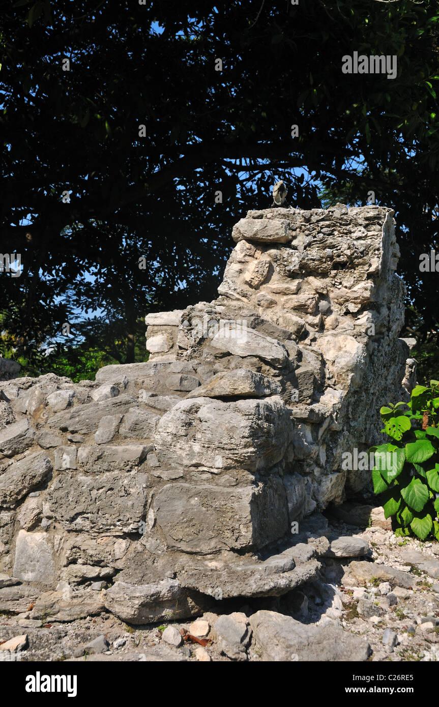 Green Iguana atop Mayan Ruins in Playa Del Carmen Mexico - Stock Image