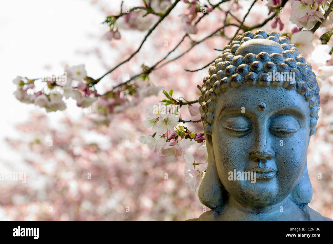 Zen Buddha Meditating by Cherry Blossoms Trees Blurred Background - Stock Image