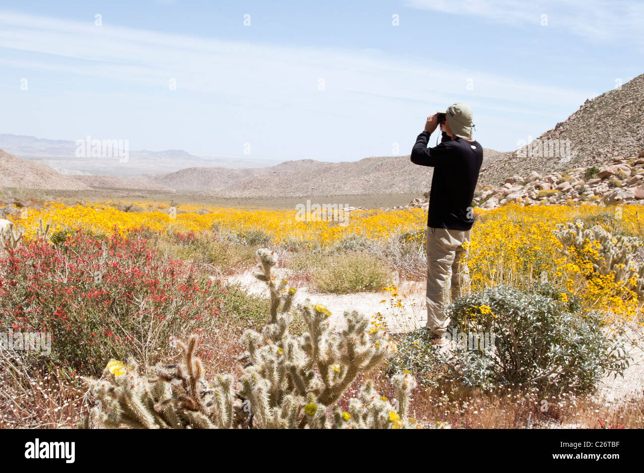 Birdwatcher at Anza Borrego Desert State Park - Stock Image