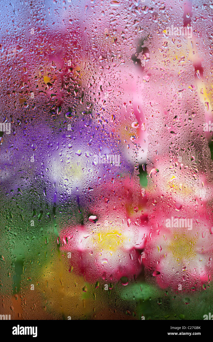 Polyanthus reflected in water droplets in green house glass Stock ...