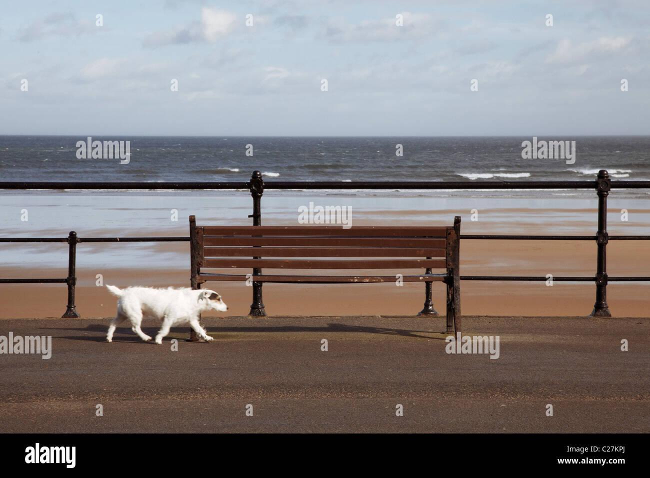 Remarkable Small Dog Walking Fast Past Seaside Bench Stock Photo Frankydiablos Diy Chair Ideas Frankydiabloscom