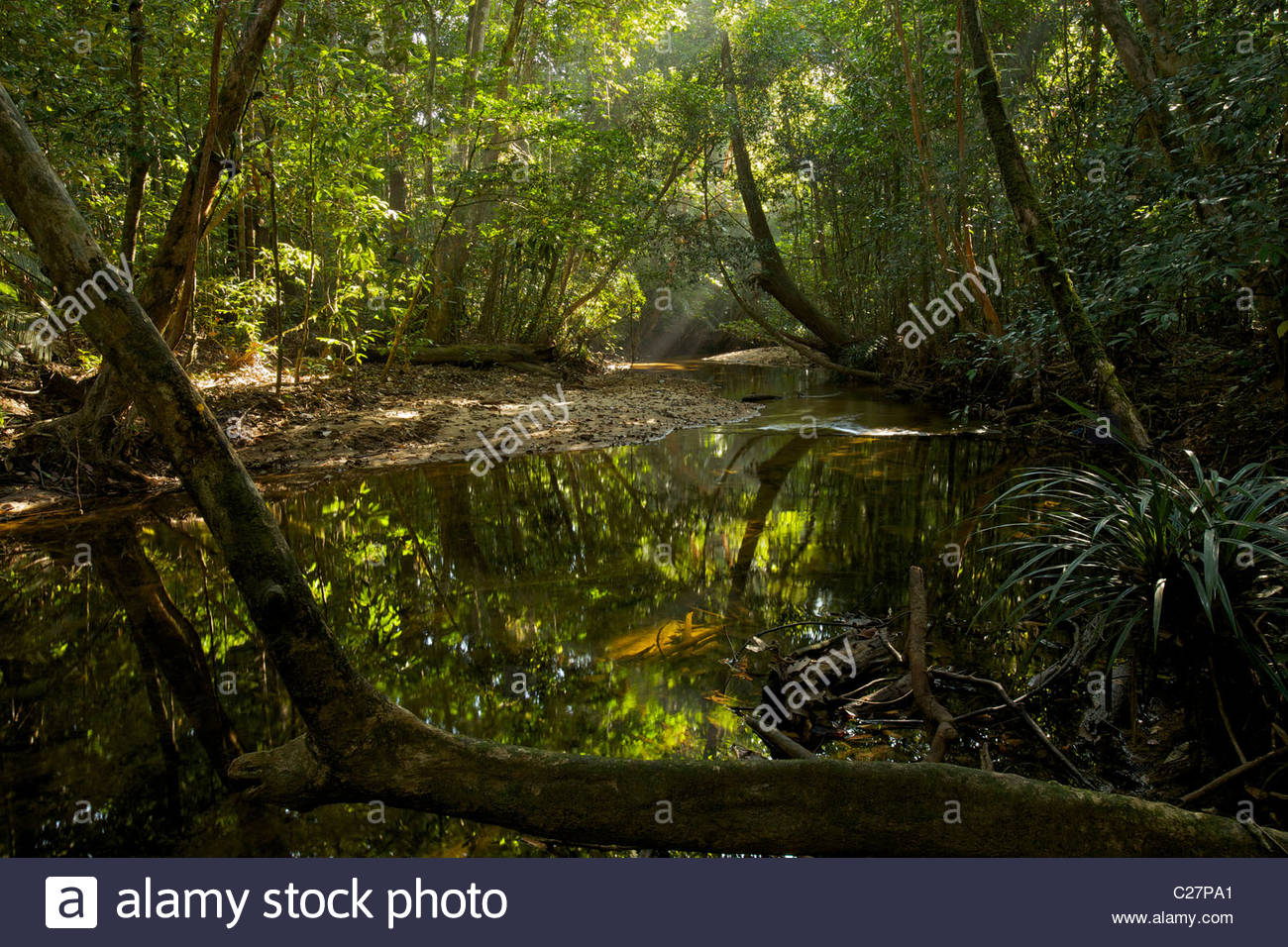 A rain forest stream in Gunung Palung National Park. - Stock Image