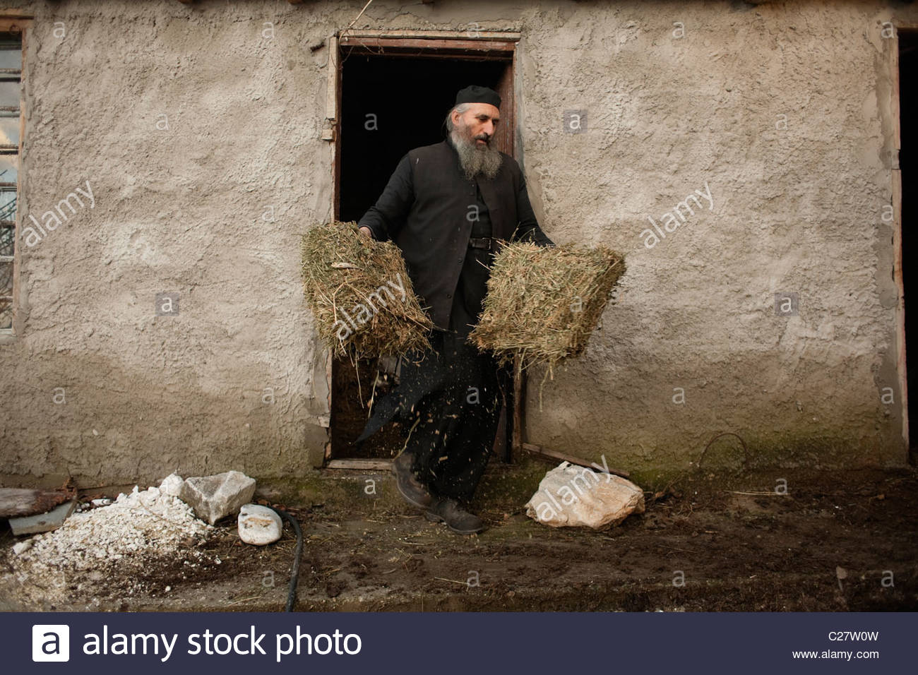 Father Daniel grabs hay for his mules in the skete of Saint Anne. - Stock Image