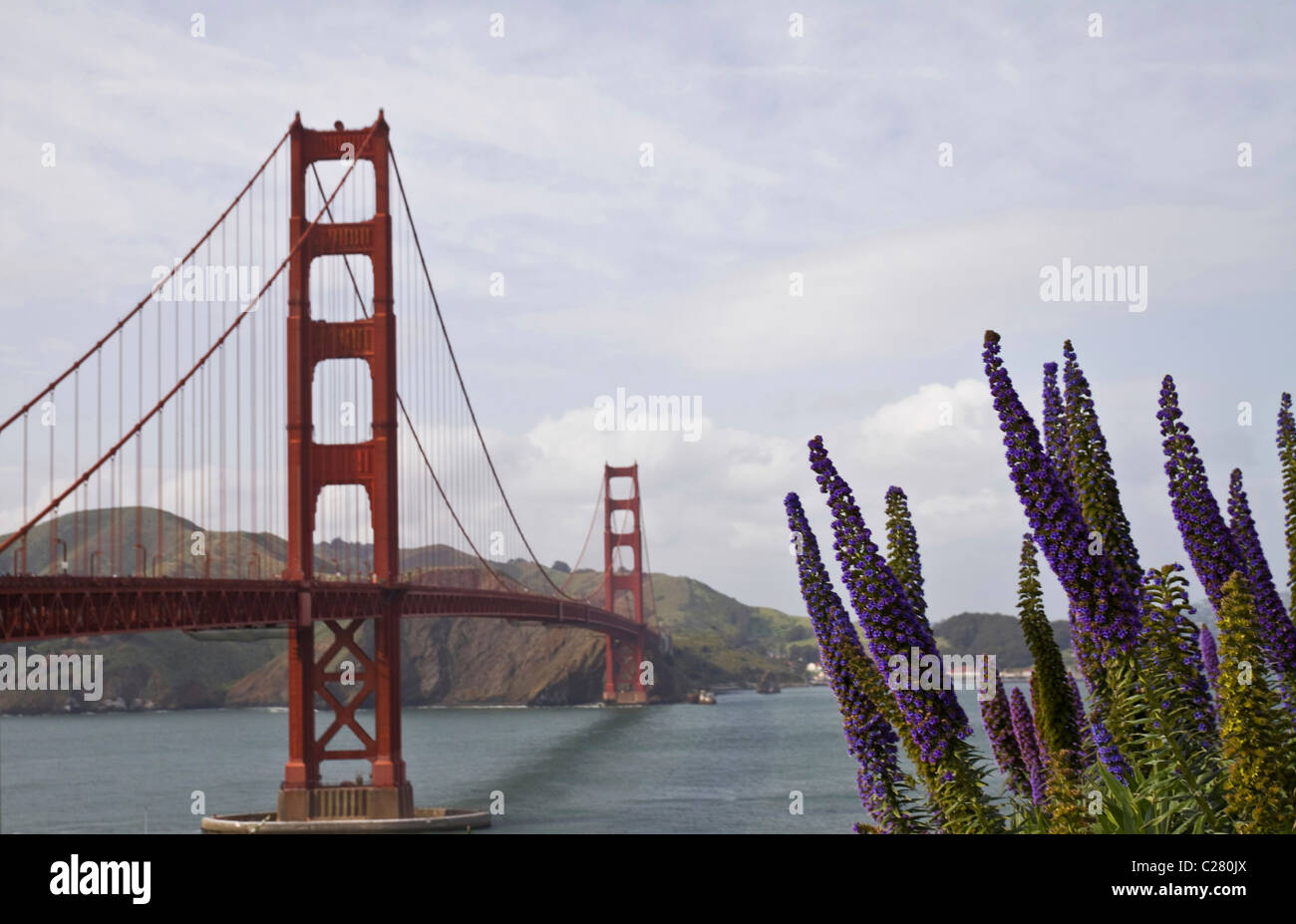 View of Golden Gate Bridge and large purple flowers from viewpoint, San Francisco Bay, California, USA - Stock Image