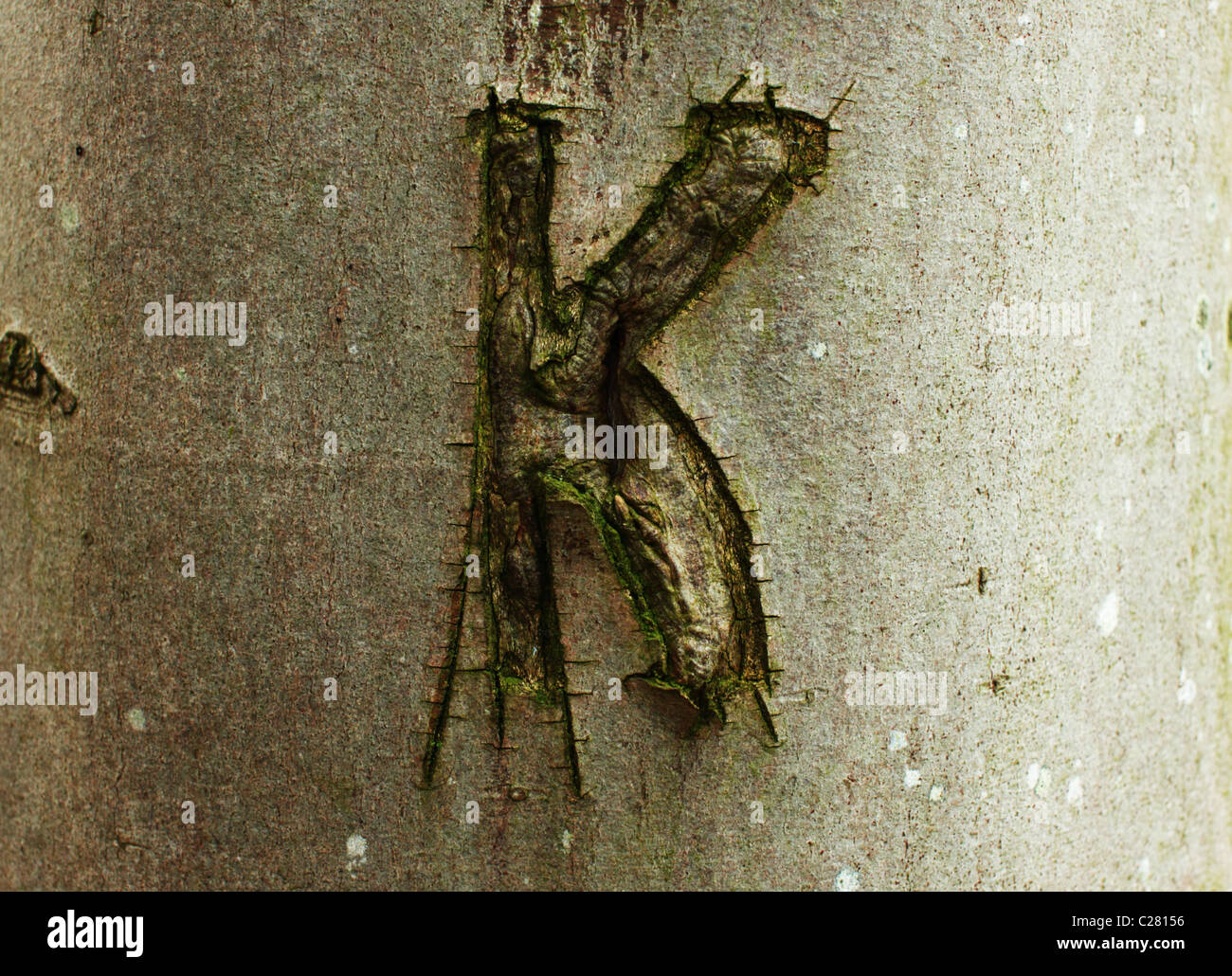 letter 'K' cut long time ago on the tree steam - Stock Image