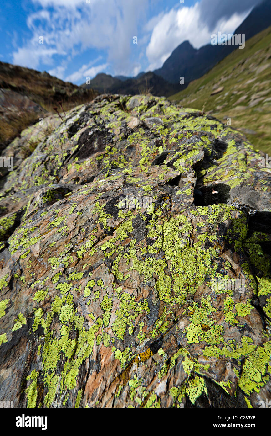 Lichen growing on rocks in clean mountain air Arcalis Andorra - Stock Image