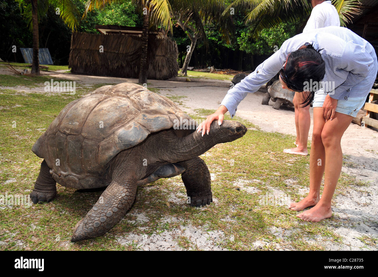 Giant Tortoise on Curieuse Island reserve, Seychelles. - Stock Image