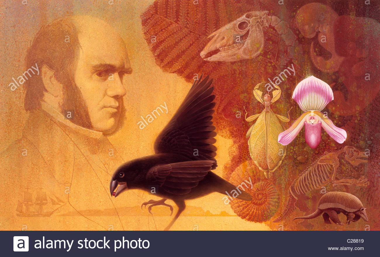 A painting of Darwin and the variety of life that intrigued him. - Stock Image