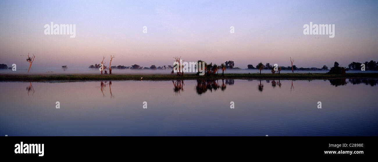 The reflection of trees in a calm mist shrouded billabong before dawn. - Stock Image