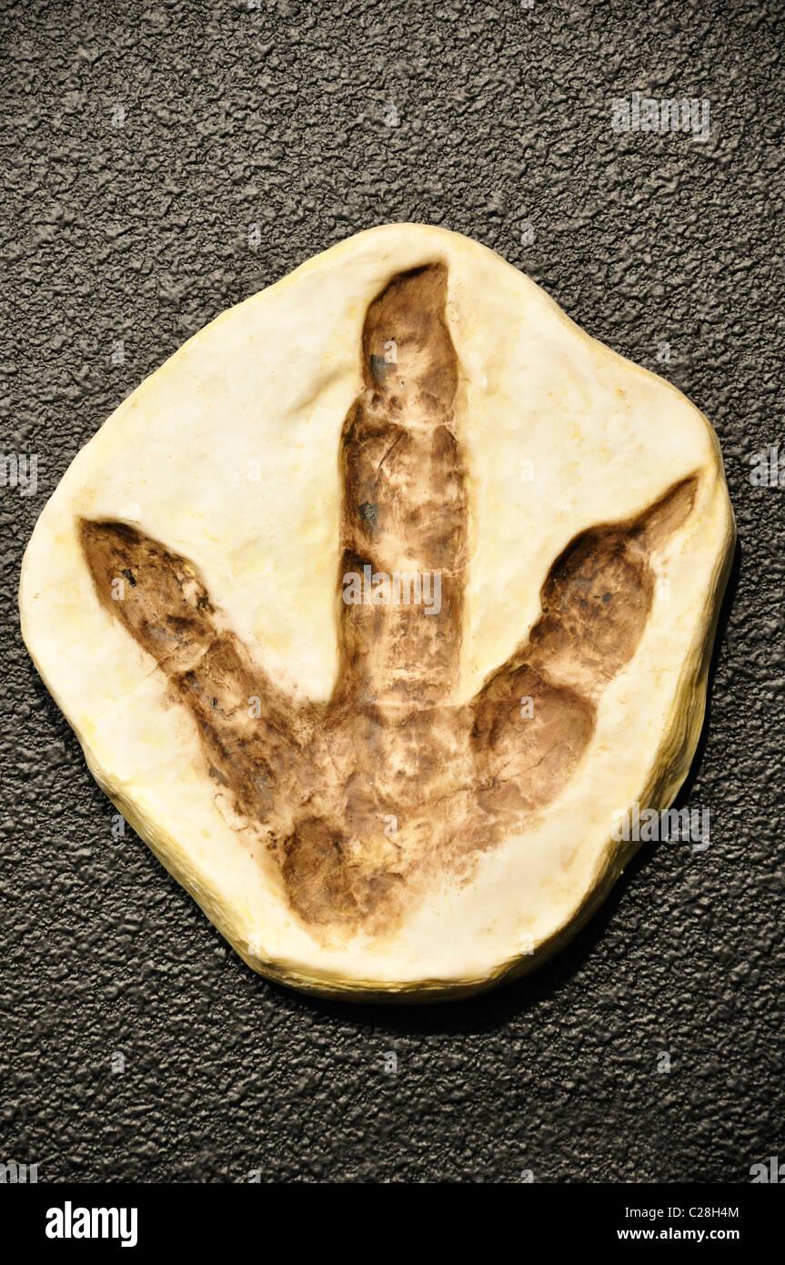 Dinosaur World, Glen Rose, Texas, USA - fossilized dinosaur footprint replica in gift shop - Stock Image