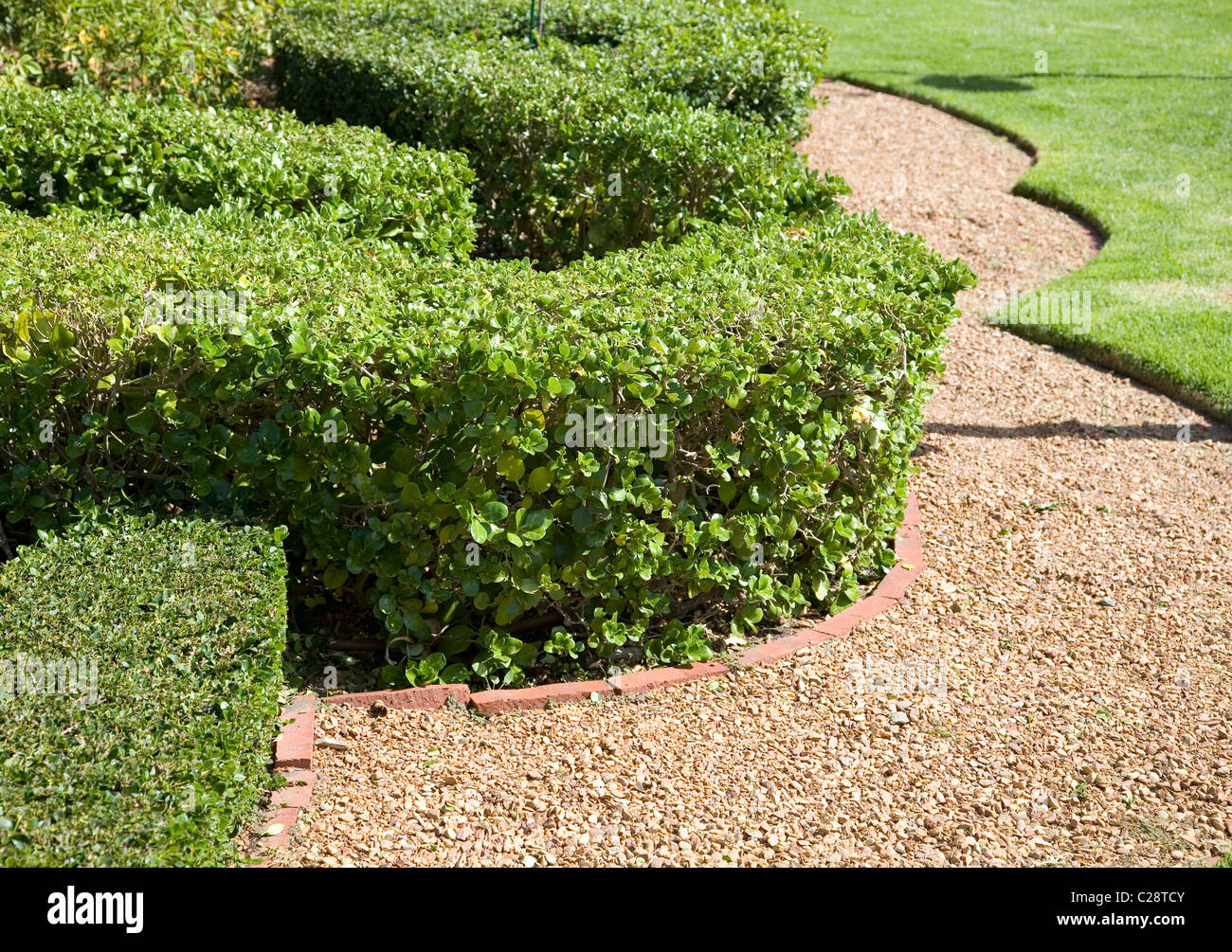 Trimmed hedges along gravel - Stock Image