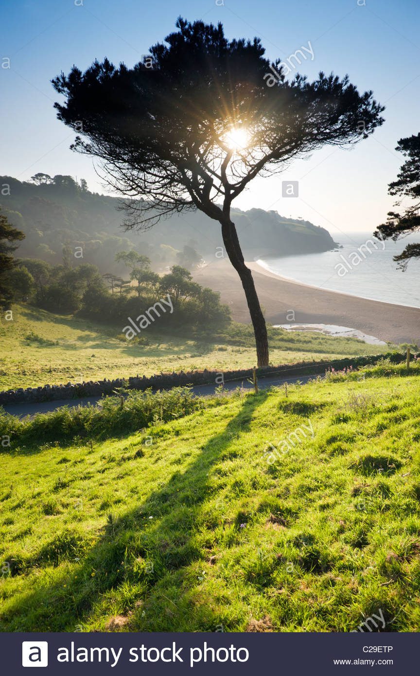 Tree on the hillside above Blackpool Sands, South Hams, Devon, England. - Stock Image