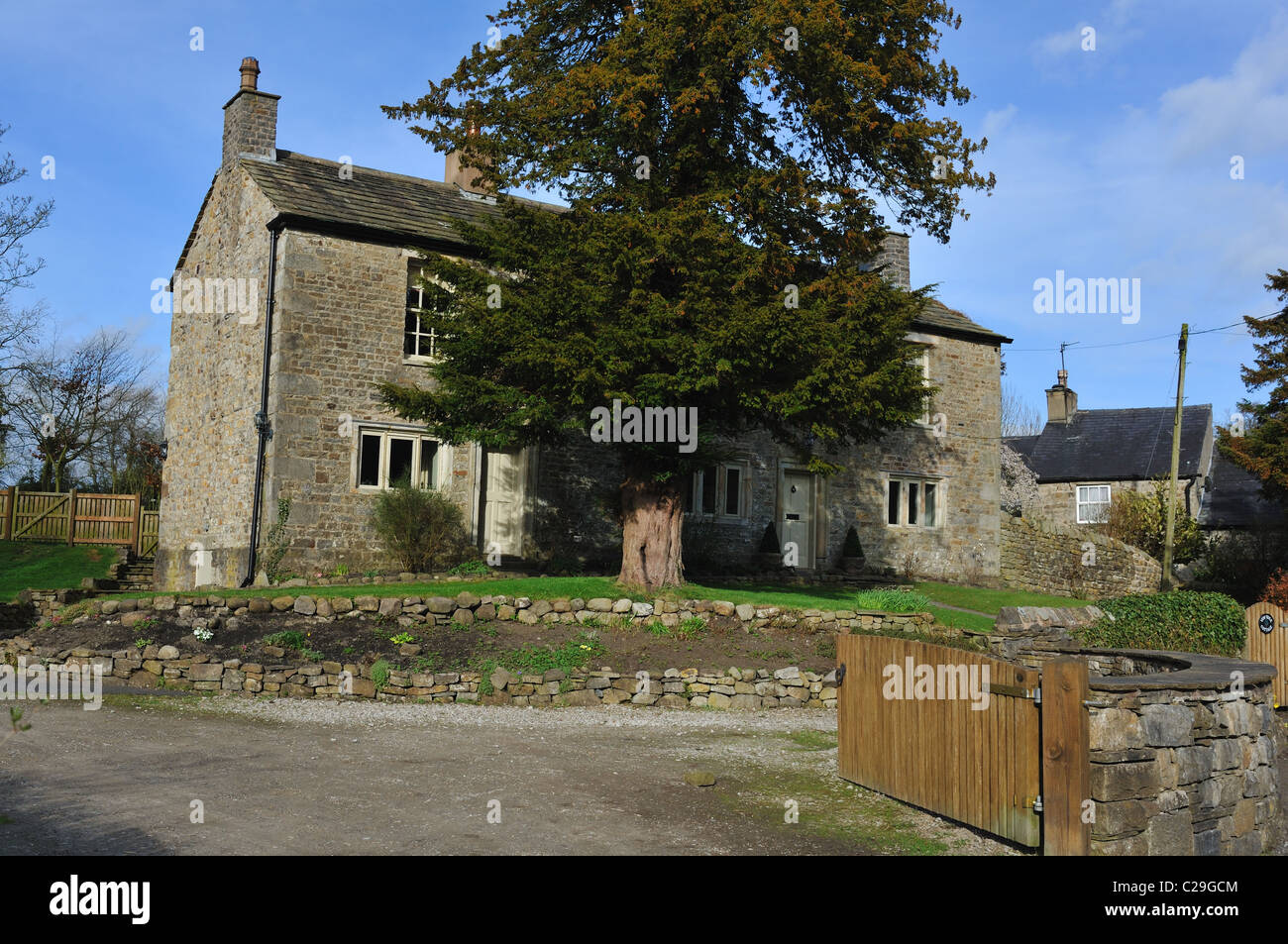 Typical farmworkers cottage built around 1750, Bolton by Bowland  with Yew tree in the garden - Stock Image