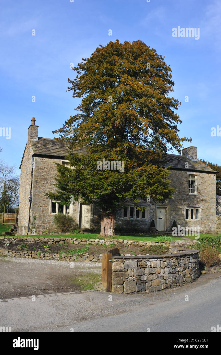 Yew Tree Cottage , a typical stone built cottage ,Bolton by Bowland, West Yorkshire - Stock Image