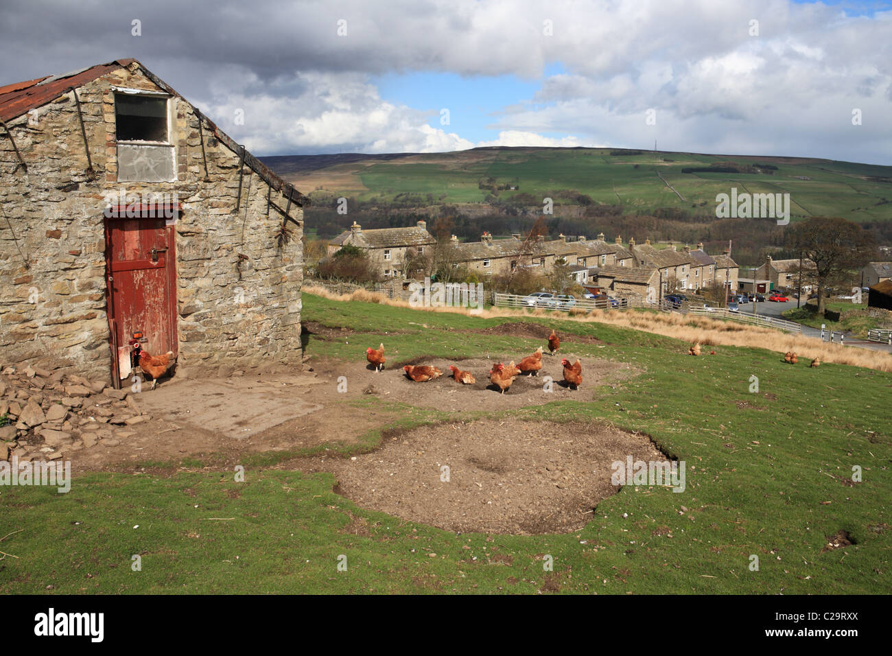Free range hens at Hill End near Frosterley, Weardale, north east England, UK - Stock Image