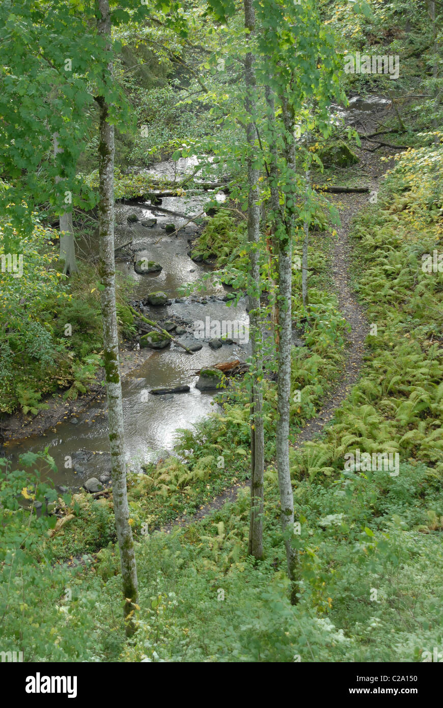 Stream flowing through a microclimate ravine. - Stock Image