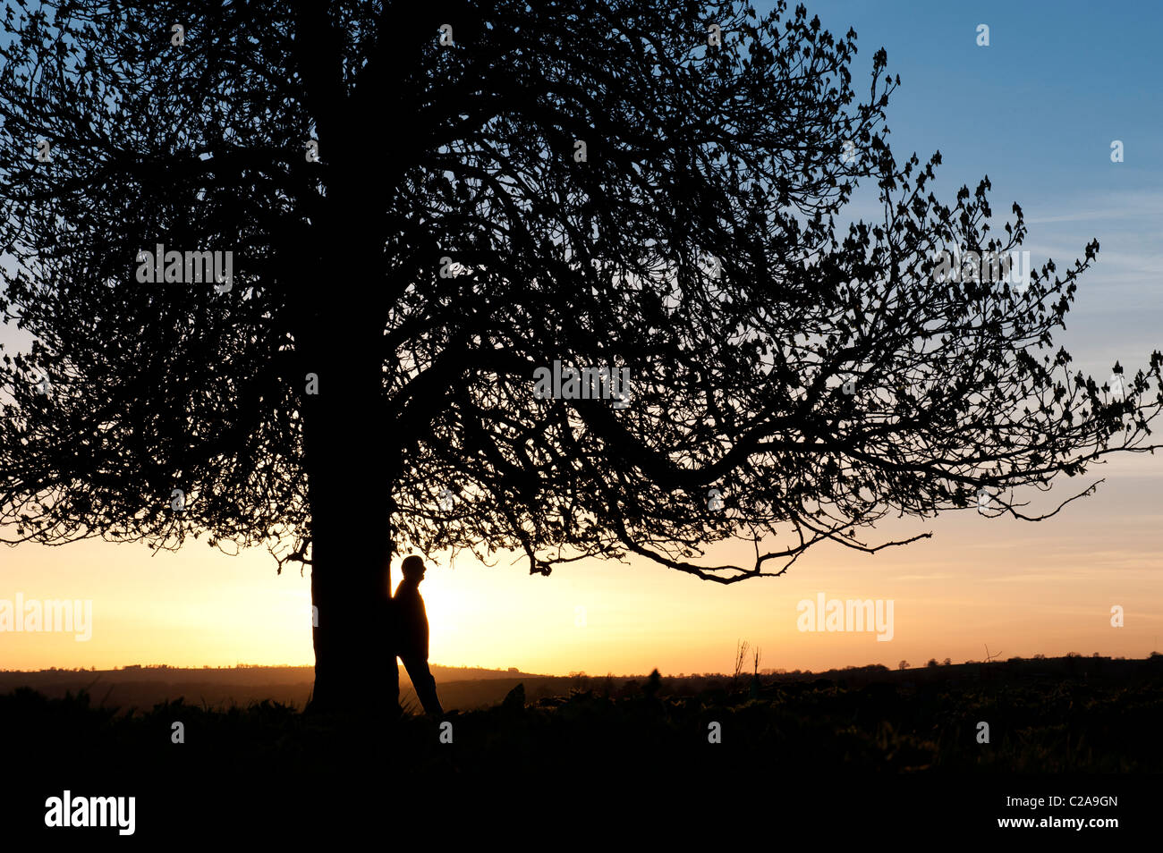 Aesculus hippocastanum. Man leaning against Horse Chestnut tree at sunset. UK. Silhouette - Stock Image