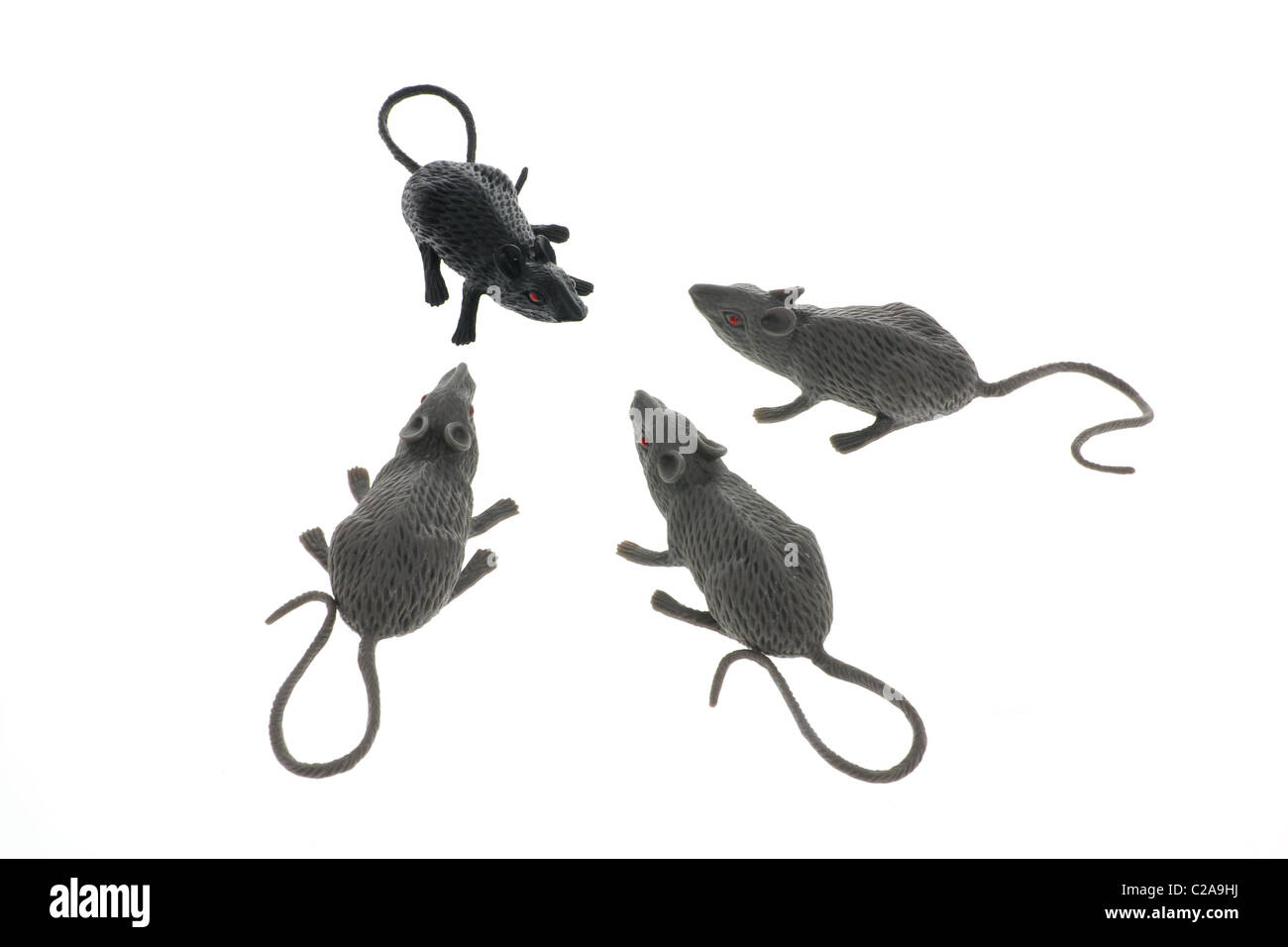 Toy Rats - Stock Image