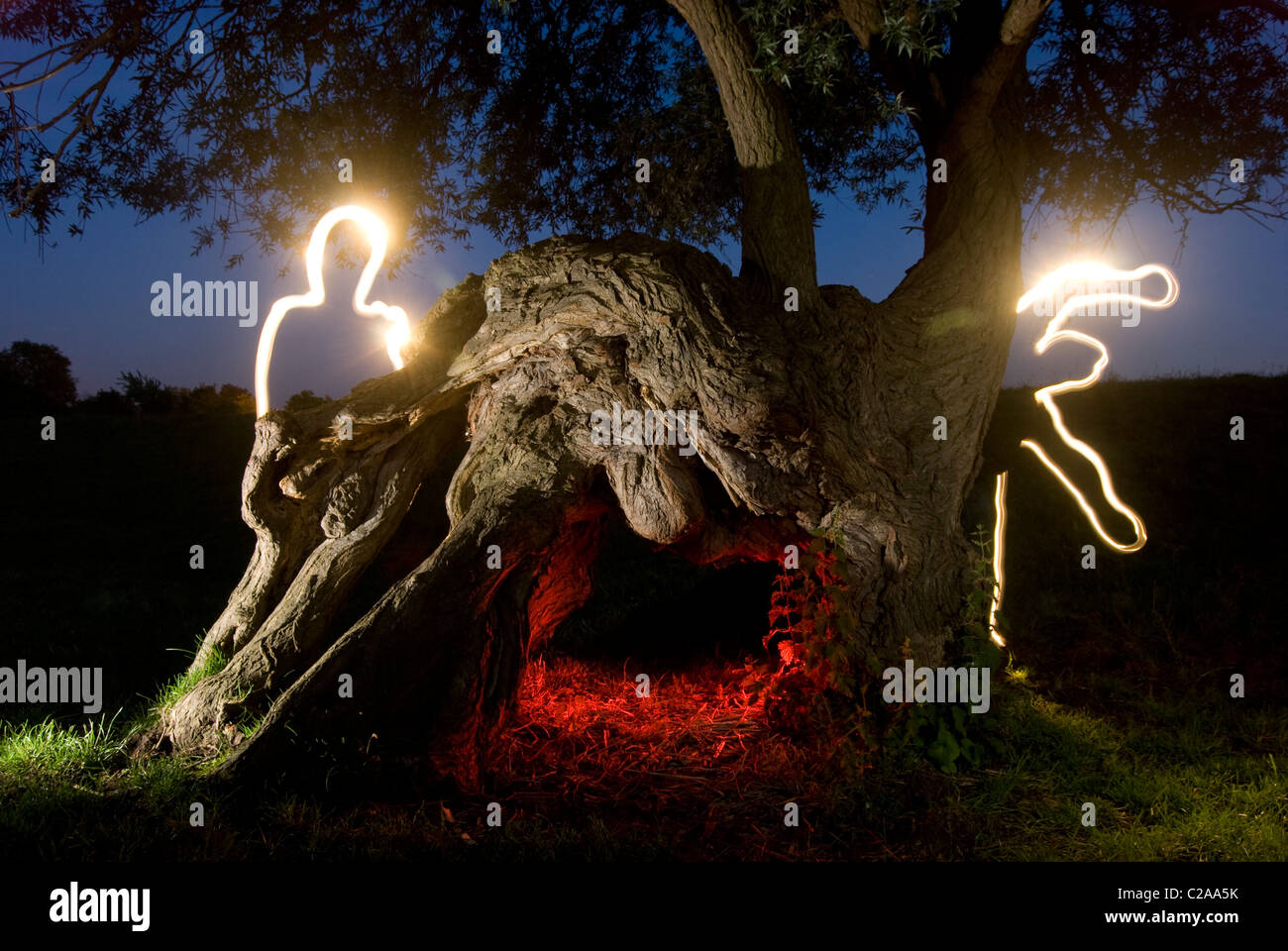 Creative light painting around a deformed tree at night time - Stock Image