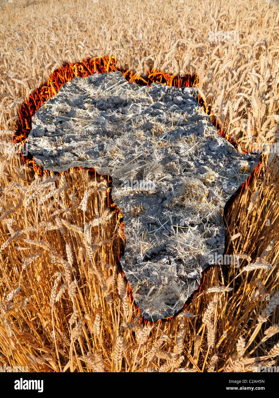no hope for africa :, dry patch of land in the shape of africa amidst a wheat field - Stock Image