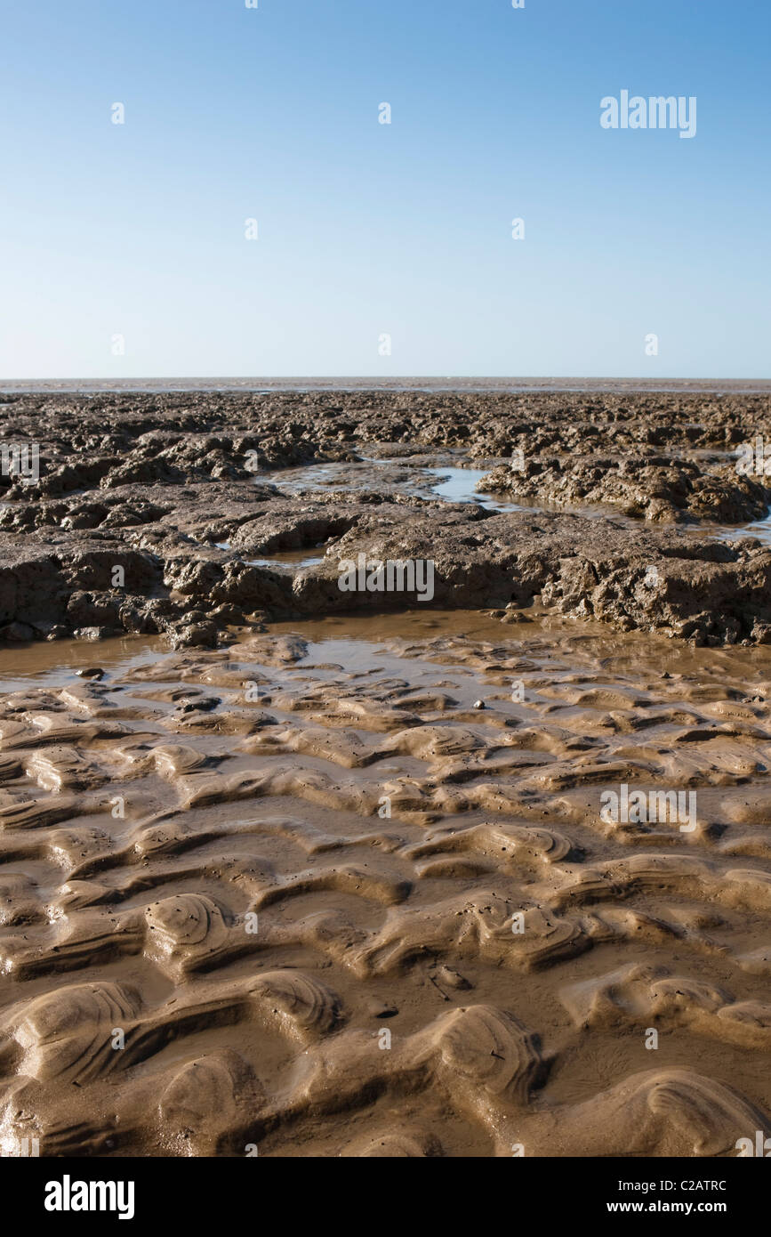 Mud flat, Amazon, South America - Stock Image