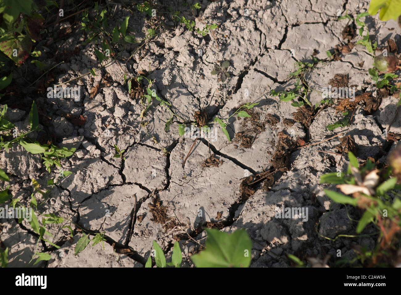 Dry, cracked mud - Stock Image