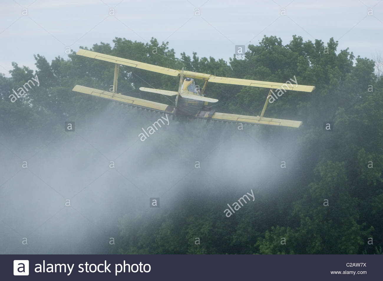 A crop duster airplane sprays pesticide over potato field. - Stock Image