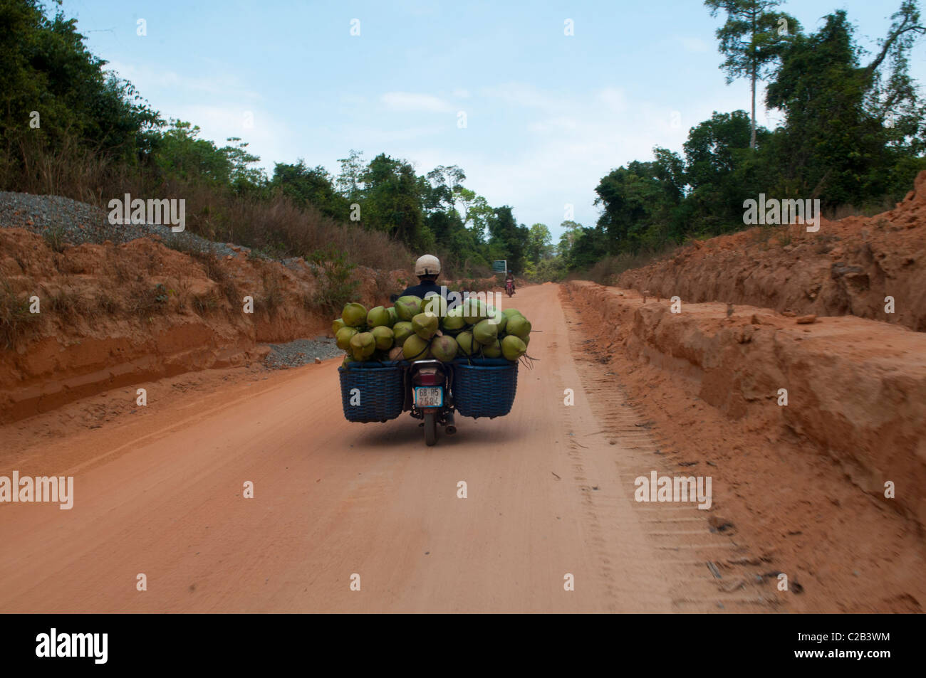 riding coconuts home on Phu Quoc Island in Vietnam - Stock Image