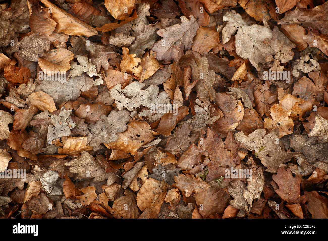Dry Leaves Stock Photos & Dry Leaves Stock Images - Alamy