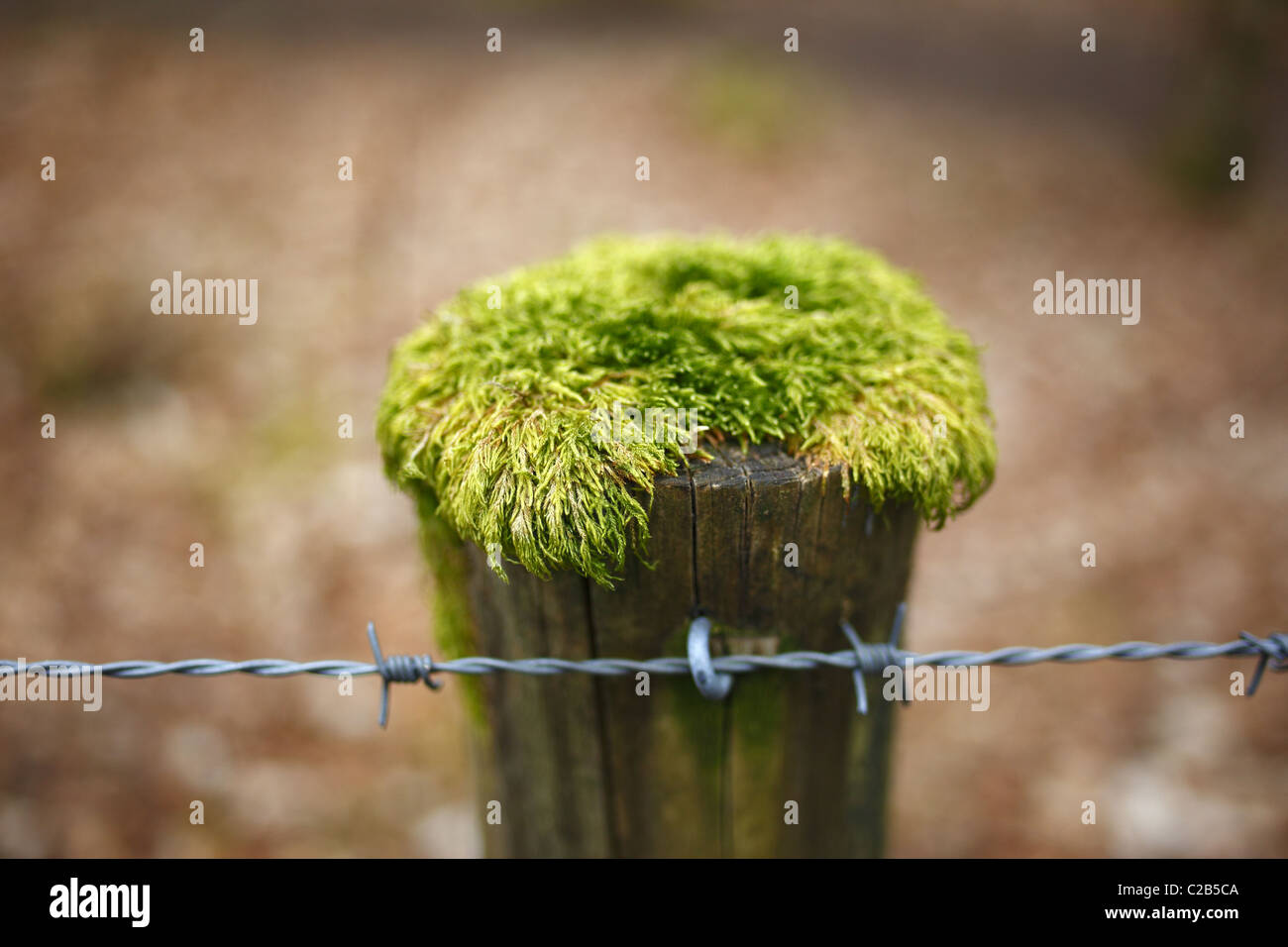 Moss growing on top of a fence post. - Stock Image