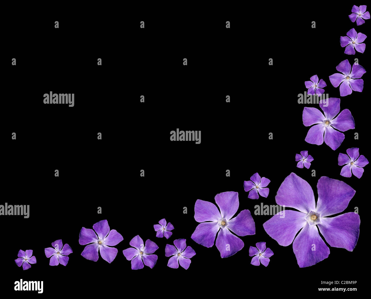 periwinkle background.html
