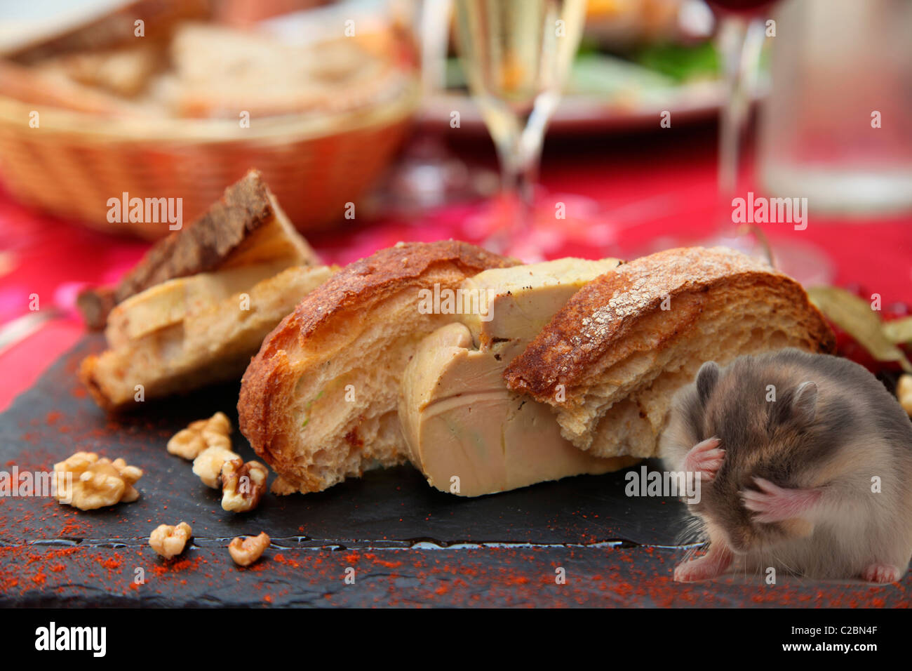 FUNNY HAMSTER and FOIE GRAS - Stock Image