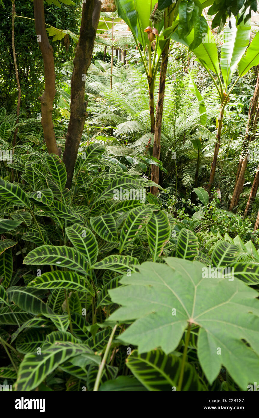 Dense jungle foliage in an indoor rainforest - Stock Image