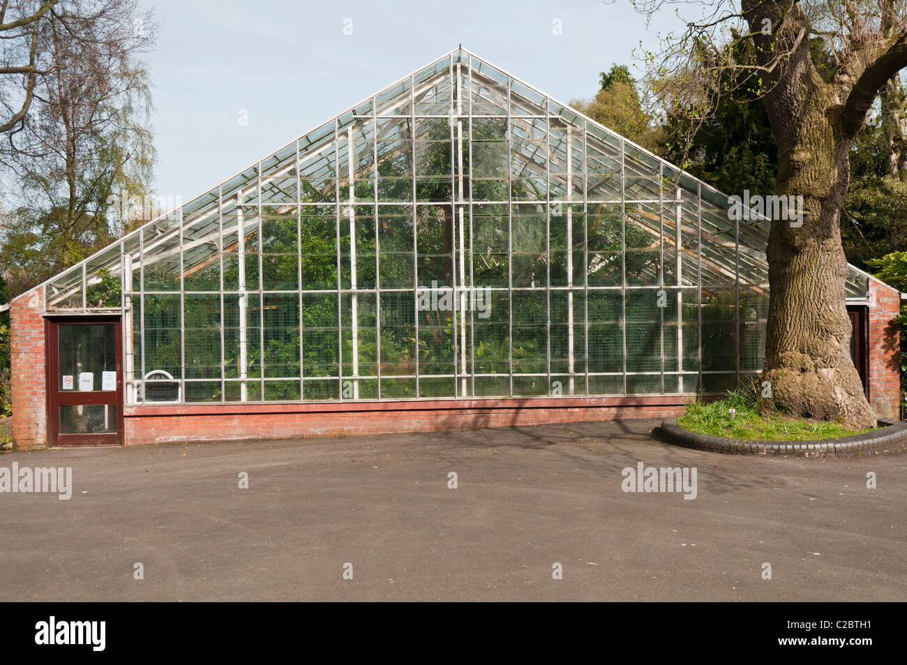 Tropical Ravine, Botanic Gardens, Belfast - Stock Image
