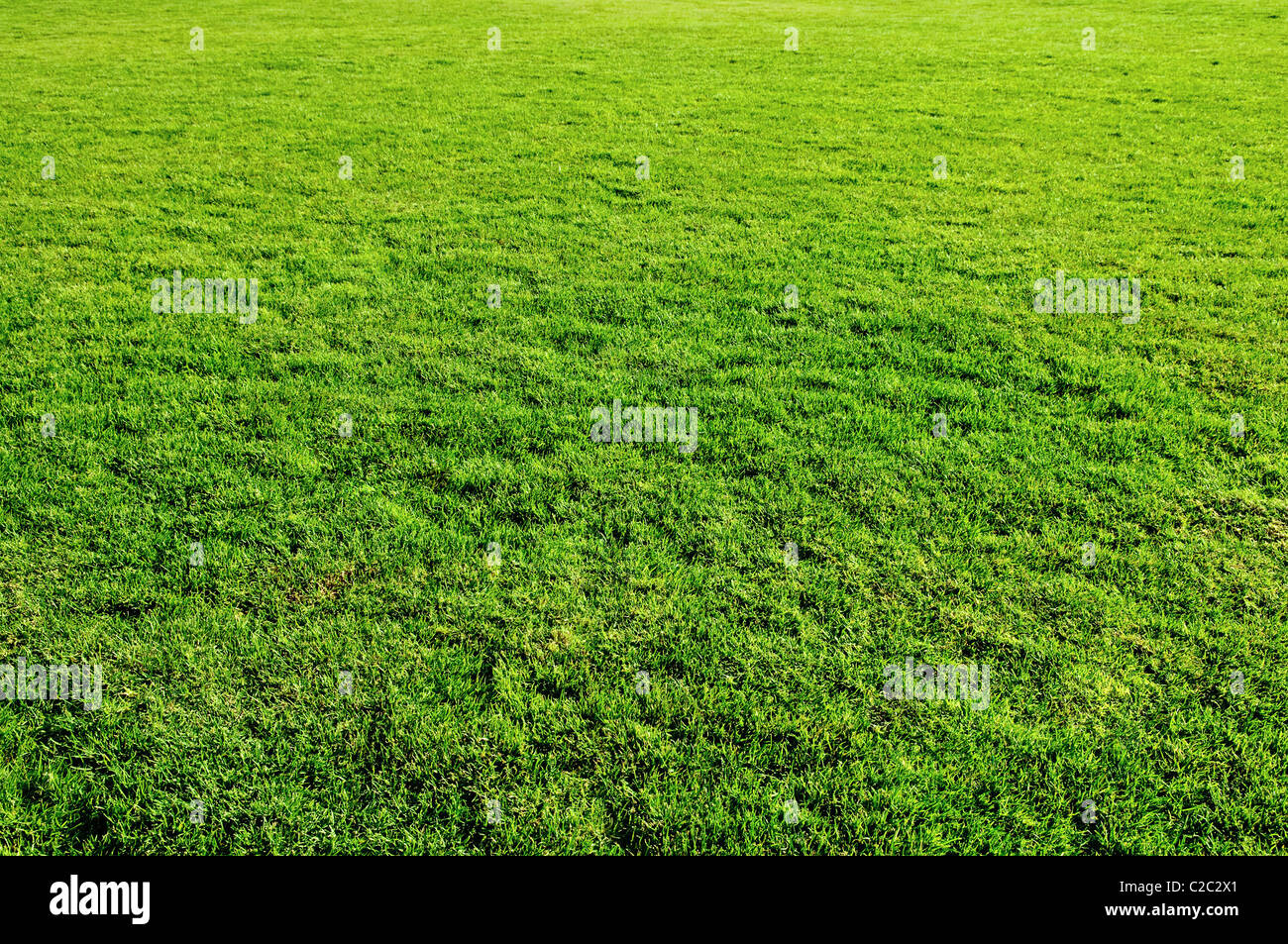 spring green grass meadow for design - Stock Image