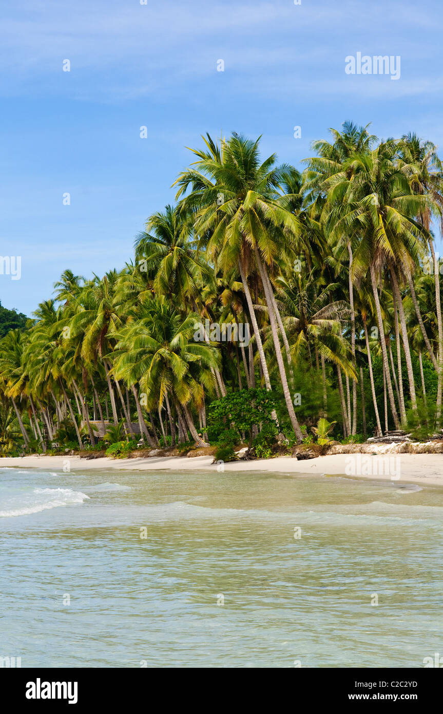 Thailand. Palm trees on loneliness beach on island Koh Kood - Stock Image